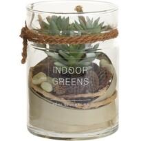 Osorno mű pozsgás levelű növény üvegpohárban,  11 x 13,5 cm
