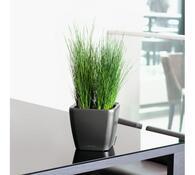 Lechuza Quadro LS 35 plastový květináč samozavlažovací antracit
