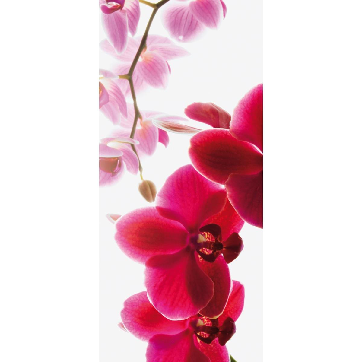 Fototapeta orchidea 95 x 210 cm, Wall
