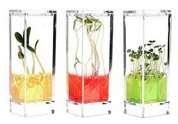 Plantarium Garden LAB, transparentní