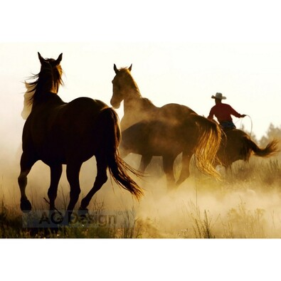 Fototapeta koně 270 x 360 cm