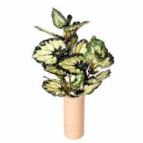 Sztuczny kwiat Begonii, zielono - żółta