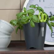 Květináč na bylinky Limes uno 1,3 l, grafitová