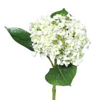 Hortensie artificială albă, 44 cm