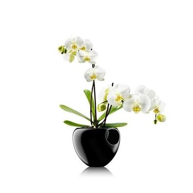 Samozavlažovací květináč 15 cm, černý