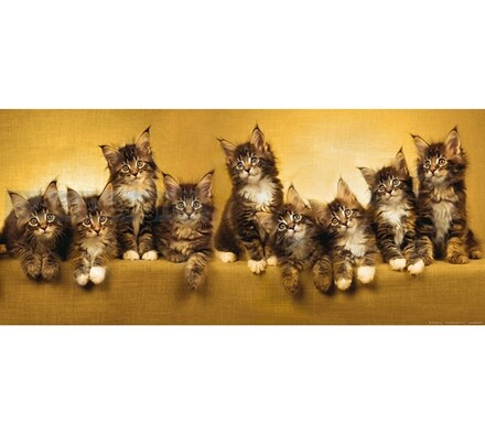 Fototapeta Kočky 202 x 90 cm