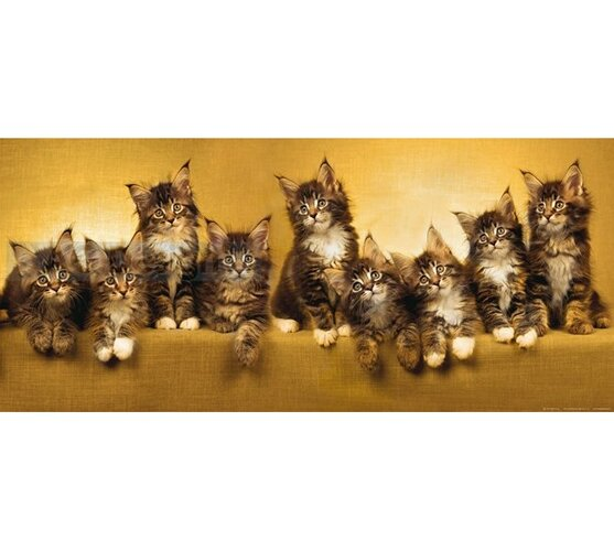 Fototapeta Mačky 202 x 90 cm