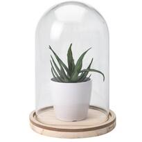 Koopman Umelá rastlina v skle Stephanie, 19 cm