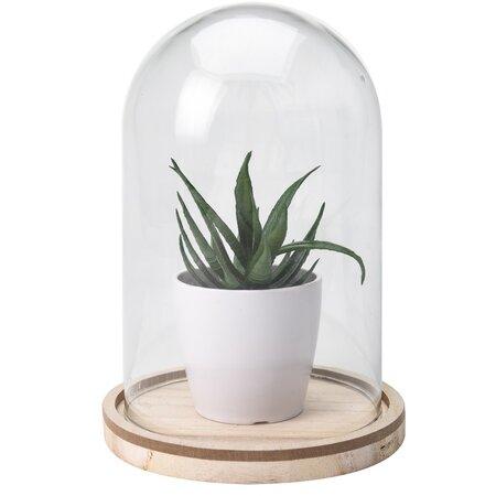 Umelá rastlina v skle Stephanie, 19 cm