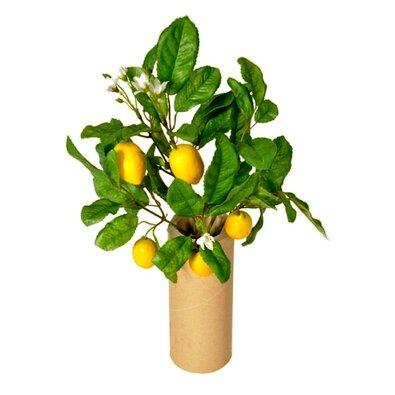 Mű mini citromfa terméssel, 30 cm