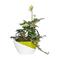 /kvetinace-a-vazy/