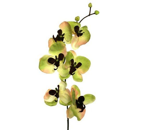 Umelá kvetina orchidea, zeleno-hnedá