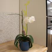 Tyčka k orchideji list, průsvitná zelená, 2 ks