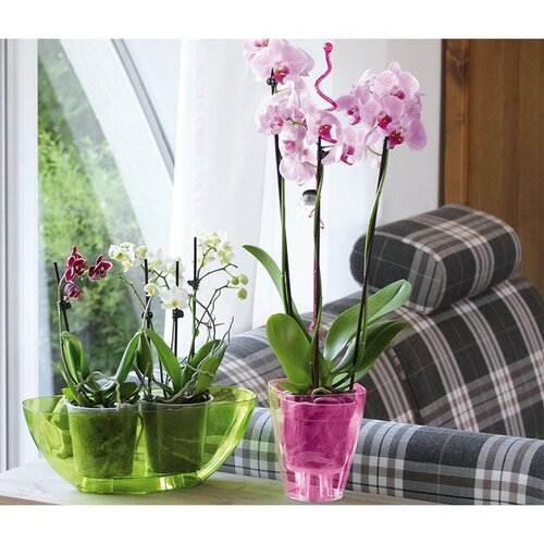 Produktové foto Prosperplast Obal na orchidej Coubi hranatý čirá, pr. 13,2 cm