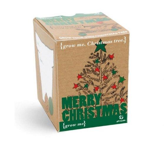 Grow me: Vianočný smrek