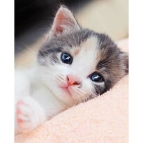 Kitten gyermek takaró, 120 x 150 cm