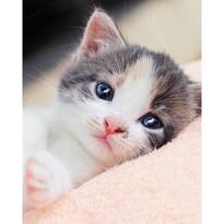 Koc dziecięcy Kitten, 120 x 150 cm