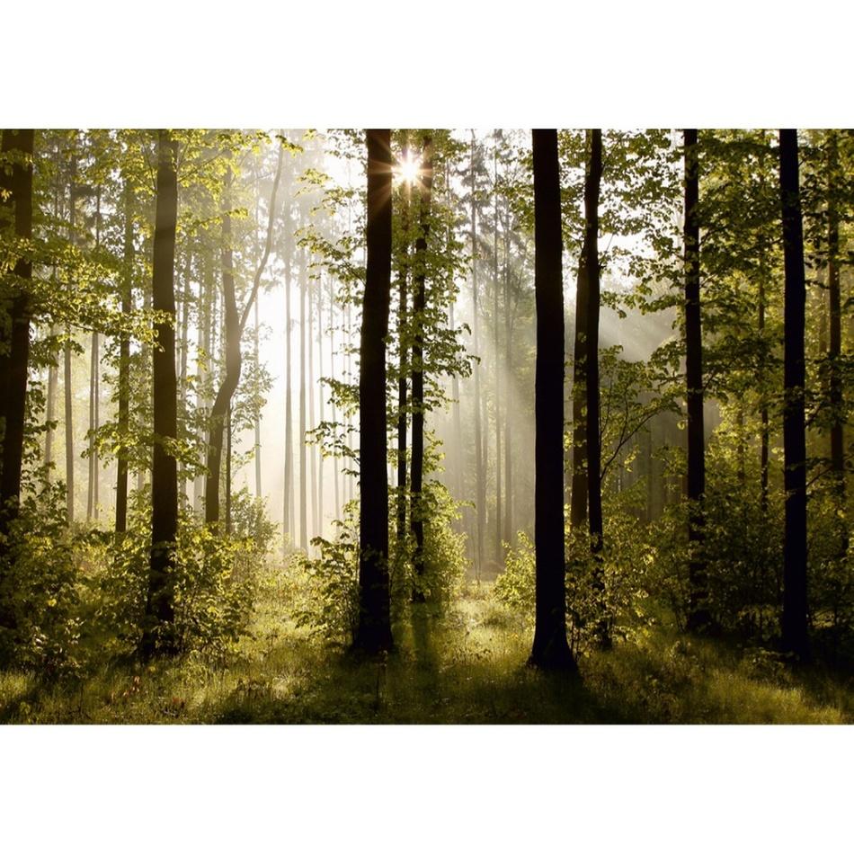 Produktové foto AG Art Fototapeta XXL Ranní les 360 x 270 cm, 4 díly