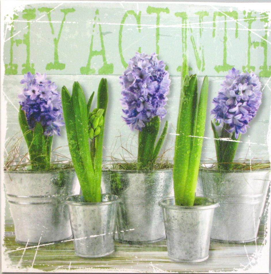 "Obraze ""Hyacinty"", 28 x 28 cm"
