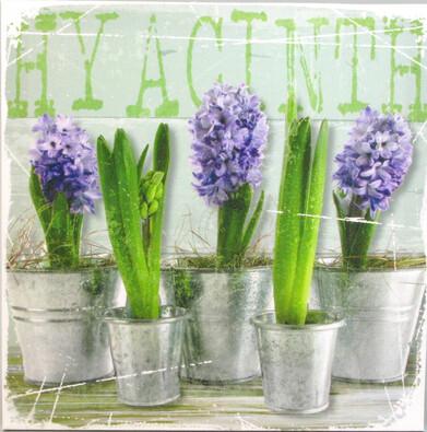 Obraz Hyacinty