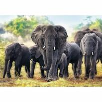 Trefl Puzzle Africké slony, 1000 dielikov