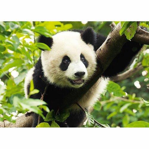 Puzzle Trefl Panda 500 dílků 100%  2 recenzí