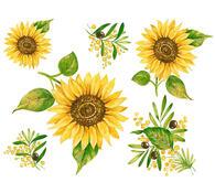 Samolepící dekorace Slunečnice