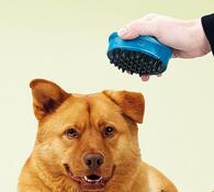 Masážní přístroj pro domácí zvířata, modrá