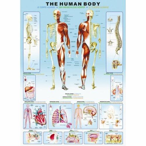 EUROGRAPHICS Puzzle Lidské tělo 1000 dílků