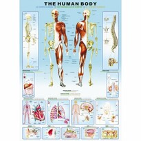 EuroGraphics Puzzle Lidské tělo, 1000 dílků
