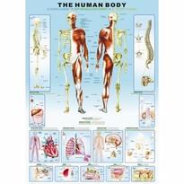 EuroGraphics Puzzle Ľudské telo, 1000 dielikov