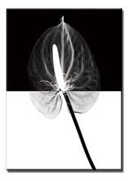 Jednodílný obraz ANTURIUM BLACK 60x80 cm, bílá + černá, 60 x 80 cm