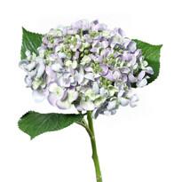 Hortensie artificială violet deschis, 44 cm