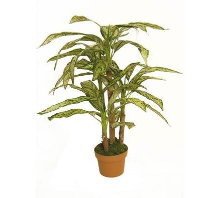 Strom Diffenbachia, 70 cm