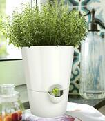 Emsa samozavlažovací květináč Fresh herbs bílá