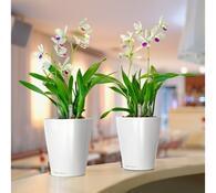 Lechuza Deltini plastový květináč samozavlažovací  bílá