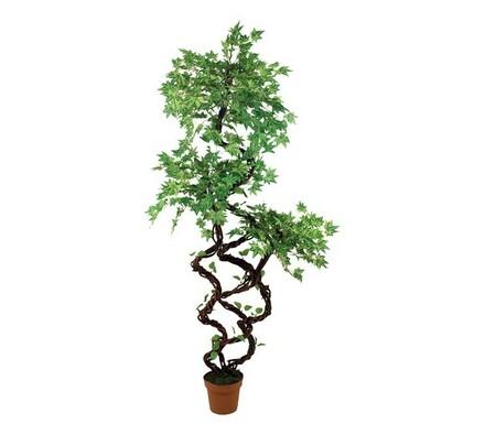 Strom javor, 170 cm, zelená, 170 cm