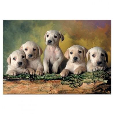 Puzzle Štěňata labradora, vícebarevná