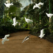 3D tapeta BIRDS bílá, sada 4 ks