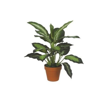 Strom diffenbachia, 50 cm, zelená, 50 cm