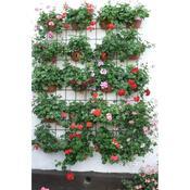Samozavlažovací květináč na zeď Siesta, terakora, 29 cm, oranžová