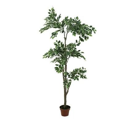 Strom ficus panašovaný, 182 cm, tmavý, zelená, 182 cm