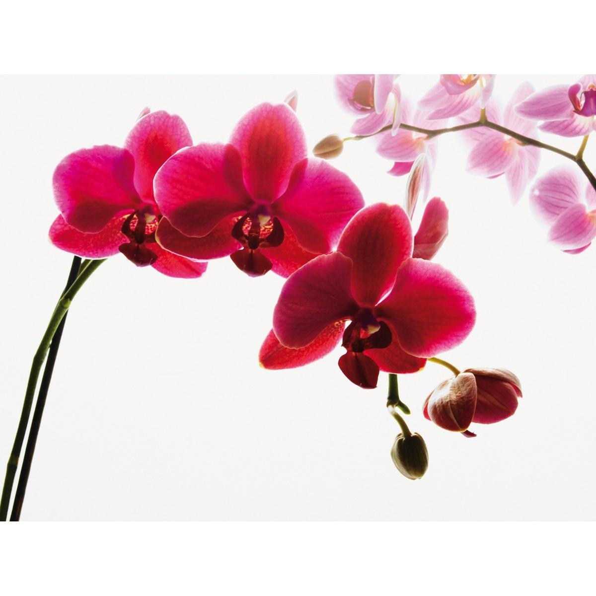 Fototapeta orchidej 315 x 232 cm, Wall