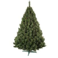 Erdeifenyő karácsonyfa, 160 cm