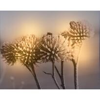 Koopman LED Obraz na plátně Alvite, 25 x 20 cm