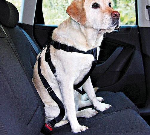 TRIXIE pás pre psov, L 70 - 90 cm