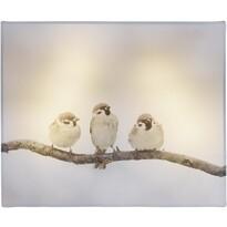 Animal and snow Bird LED vászonkép, 20 x 25 cm