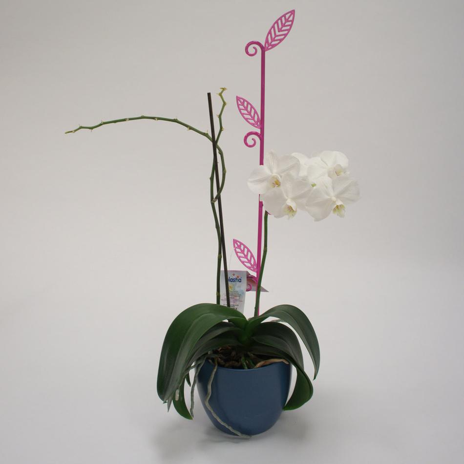 Tyčka k orchideji list, průsvitná fialová, 2 ks, Plastia