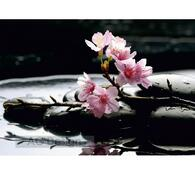 Fototapeta Květina na kameni 254 x 360 cm