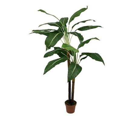 Strom Diffenbachia, 180 cm, velký